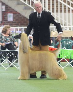 Great handling can win dog shows and so can brilliant grooming, so, which is the most important? If a poorly presented dog flies into the ring with every sinew oozing breed type with carriage st. Big Dog Toys, Funny Dog Toys, Thai Ridgeback, Tiny Dog Breeds, Akc Breeds, Dog Separation Anxiety, Cool Dog Houses, Interactive Dog Toys, Custom Dog Collars