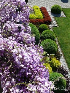 Ogród mały, ale pojemny;) - strona 119 - Forum ogrodnicze - Ogrodowisko