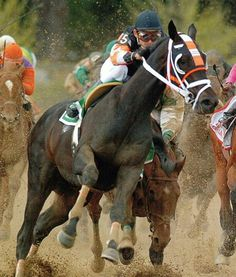 Afleet Alex falls to knees after being cut in front of by longshot.  Gets back up, wins 2005 Preakness Stakes.  #Likeaboss