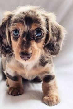 Super Cute Puppies, Baby Animals Super Cute, Cute Baby Dogs, Cute Dogs And Puppies, Cute Little Animals, Cute Funny Animals, Doggies, Funny Dogs, Baby Animals Pictures