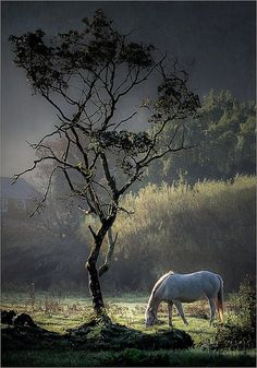 llbwwb: Early Feed (by AJ Scapes) What a beautiful picture All The Pretty Horses, Beautiful Horses, Animals Beautiful, Beautiful Sky, Horse Photos, Horse Pictures, Horse Photography, Nature Photography, Photo Animaliere