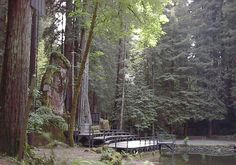 Creepy Stories and Theories About Bohemian Grove Bohemian Grove, Hotel California, Northern California, Outdoor Stage, Creepy Stories, Redwood Forest, Conspiracy Theories, North Yorkshire, Illuminati