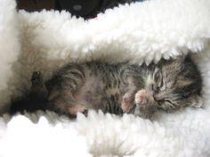 One abandonned snuggler—SAVED!