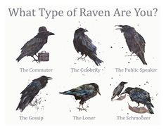 What type of Raven are you?