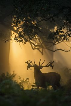"""Red Deer.""   (Title Given By The Photographer:  Felix Morlan Gonzalez on 500px.)"