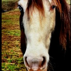 She had the most amazing blue eyes - rescue wild Mustang