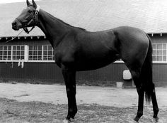 La Prevoyante: sired by Buckpasser, runner-up to Secretariat as 2 year old horse of the year