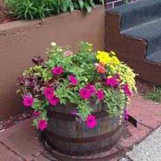 Steven's Neighborhood flowers in Summerland
