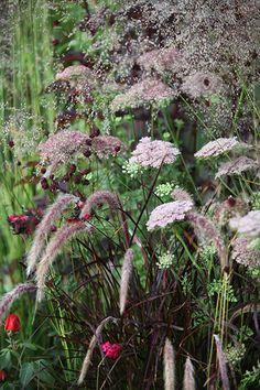 Buy Pimpinella & Pennisetum plant combination Pimpinella and Pennisetum 'plant combination': Delivery by Crocus
