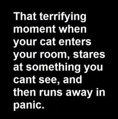 Omg... This happened to me a lot! My first thought was ghost! Then I realized it was a raccoon he was seeing.