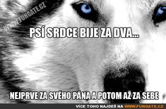 Psí srdce bije za dva... Motto, Cute Dogs, Quotations, Best Friends, Jokes, Wisdom, Humor, Motivation, Pictures