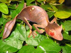Top 10 Fantastic and Surreal Creatures - Listverse