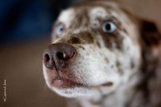 Captured Jems Photography -Pet Portraits My trixie girl! Pet Portraits, Pets, Photography, Animals, Photograph, Animales, Animaux, Photo Shoot, Animal