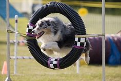 How to Get Started with Dog Agility Training