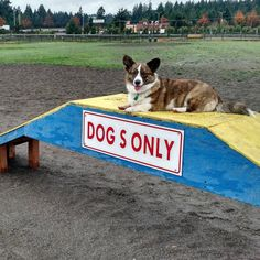 Hey, it's dogs only! No humans allowed! - Hawk's Prairie Dog Park - Lacey, WA - Angus Off-Leash #dogs #puppies #cutedogs #dogparks #lacey #washington #angusoffleash