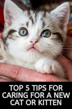 13 Best Cute Funny Kittens Images In 2020 Kittens Cats