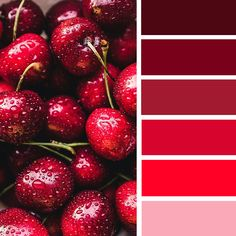 Red cherry color palette