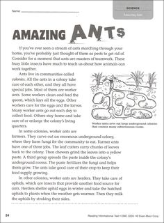 Image result for How does a queen ant get to be a queen?