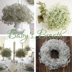"It's not the cheap filler it once was.... baby's breath can be the epitome of ""less is more"" ~ for the budget conscious bride who still wants to make a statement...."