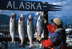 Seward Alaska Fishing Derby
