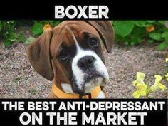 99% of the time this is true. Then comes the 1% when you need to say goodbye. #BoxerDog