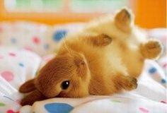 Cutest Rabbit ♥