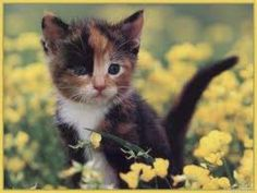 Cuki Cicák - Képgaléria - cica