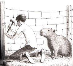 This is a much cuter capybara