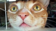 """In """"What Cats See...,"""" the fabulous feline duo of Cole and Marmalade explain what cats see when they look at everyday objects around the house in an effort to further their mission in bridging the ..."""