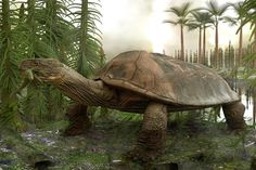 After the extinction of the dinosaurs, there was a turtle (Carbonemys) that was the size of a car and could eat crocodiles. Jurassic Park, Prehistoric Animals, Extinct Animals, Wtf Fun Facts, Random Facts, Animal Facts, Crocodiles, Tortoises, Fauna