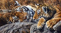 Sleepers is an original painting in acrylic of a female tiger and her cub. This painting is by world reknowned wildlife artist Alan M Hunt Wildlife Paintings, Wildlife Art, Animal Paintings, Big Cats Art, Cat Art, Animals Images, Animals And Pets, Nature Animals, Wild Animals