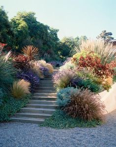 colourful mix of plants, gravel, Mediterranean style city garden, design by Elysian Landscapes (Step Design Exterior) Dry Garden, Garden Paths, Garden Landscaping, Landscaping Ideas, Landscaping With Grasses, Natural Landscaping, Prairie Garden, Modern Landscaping, Hill Garden