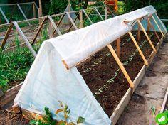 Шикарный способ выращивания огурцов на открытом грунте | Дачный участок | Яндекс Дзен