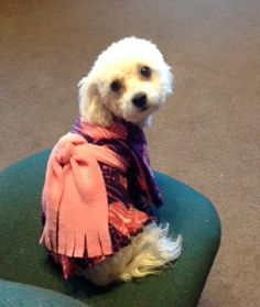 Purple Waves Blush Hearts  Pet Poncho / Dog Clothes by valygal, $9.00