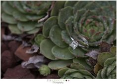 succulents made the perfect backdrop for this engagement ring shot  #lehighvalleyweddingphotographer #pixologyphotography #engagementring #happilyeverafter #weddinginspo #shesaidyes #bethlehemweddingphotographer #bridetobe