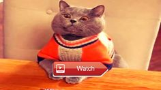 🐙 FUNNY ANIMALS COMPILATION EVER FUNNY ANIMAL PHOTOS TRY NOT TO LAUGH FUNNY ANIMALS 🐵 Funny ANIMALS Compilation Ever Funny… #funnyanimals
