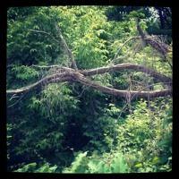 Jungle Calls--Drums of the Jungle by riveroflifelisajoy on SoundCloud