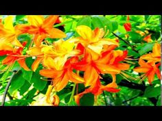 Sorinel Ghita-Flowers and Love - YouTube
