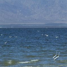 Photo Tour of the Coachella Valley and Colorado Desert: Salton Sea