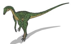 Tawa is the name given to a very recently (as of December 2009) discovered dinosaur, thought to be an ancestor of T-Rex. It is named after a Pueblo sun god. Tawa is thought to have feathers, very unusual for a Triassic dinosaur! It is thought to have lived around 215 mya, in the Middle Triassic. Not very much is known about Tawa, but hope is that extensive research and analysis will help unlock the history of the dinosaurs' evolutionary chain. Maybe proof will appear that it is related to... Dinosaur History, Prehistory, T Rex, Geology, Archaeology, Animals, Feathers, December, Middle