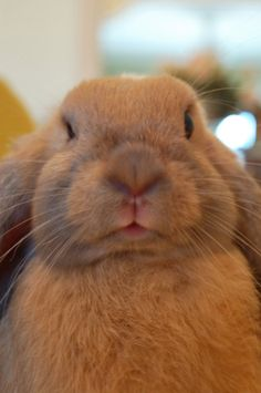 This Is What Bunny Disapproval Looks Like - September 13, 2011