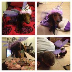Sophie Callahan's1st Puppy Birthday