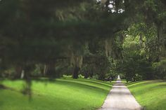 The Straight and Narrow Signed Print, Path Photo, Green Home Decor, Southern Trees Photograph, Color Fine Art Photography Wall Print
