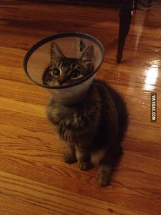 kitty cone of shame