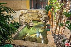 Lee's Indoor koi pond and bamboo trees