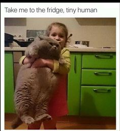 Funny Pictures of the Day - 34 Pictures - Cat Lovers - .- Lustige Bilder des Tages – 34 Bilder – Cat Lovers – … Funny Pictures of the Day – 34 Pictures – Cat Lovers – # Lovers - Cute Cat Memes, Cute Animal Memes, Funny Animal Quotes, Animal Jokes, Really Funny Memes, Cute Funny Animals, Cute Baby Animals, Funny Cats, Weird Cats
