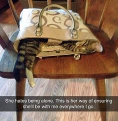 16 Funny Animal Pictures Of the Day: funny cats dogs pets Funny Animal Memes, Cute Funny Animals, Funny Animal Pictures, Funny Cute, Hilarious Pictures, Funny Memes, Cute Cat Gif, Cute Cats, Adorable Kittens