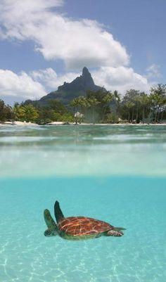 #Sofitel_Mauritius_Imperial_Resort & #Spa - #Wolmar_Beach, #Black_River - #Mauritius http://en.directrooms.com/hotels/info/4-137-2661-39805/