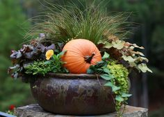 You can add  pumpkins in the pot on the patio after all the other flowers die and you will still have the fountain grass....
