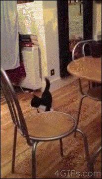 Gatto che saltella